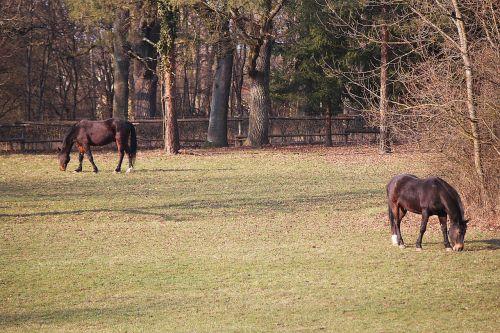 arkliai,jungtis,ganykla,ganyti