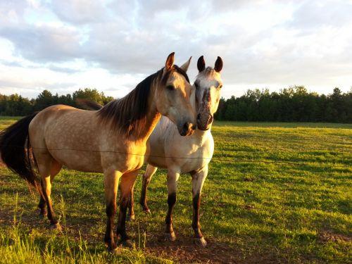 arklys, arklys, Jodinėjimas, gyvūnas, Draugystė, bendravimas, kraštovaizdis, arkliai ir draugystė