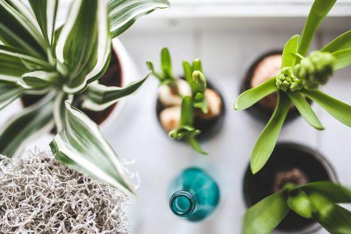 kambariniai augalai,augalai,gėlės,butelis,laistyti,žalias,gamta,balta,fonas,Iš arti,Iš arti,Iš arti,detalės