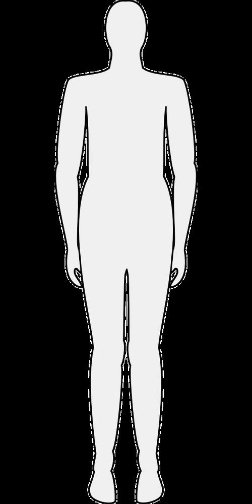 žmogus,vyras,moteris,figūra,lieknas,lieknas,nemokama vektorinė grafika
