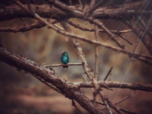 kolibris,gamta,paukščiai,sodas,natūra,šviesa,diena,augalas,grožis,ruduo,augmenija,nusileidimas,lapai,gyvenimas,vienatvė,paprastas