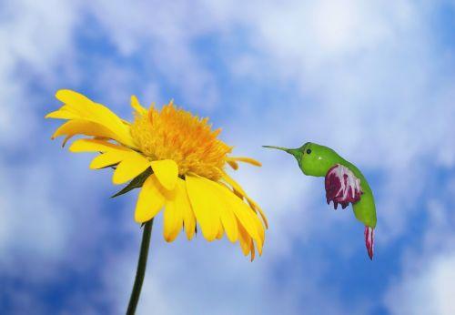 kolibris,paukštis,valgyti,maistas,gėlė,žiedas,žydėti,dangus,debesys,menas,kilniai,aštrus,pepperoni,radicchio,salotos,maisto kraštovaizdis,nektaras,plumėjimas,sąskaitą,mažas,plunksna,pinnate,gerti,gėlių nektaras,skristi,plazdėjimas,daržovės,mityba,sveikas,vitaminai,juokinga
