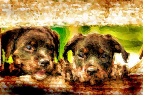 rottweiler, šuniukai, saldus, šuo, gyvūnai, šunys, nemokamos & nbsp, nuotraukos, nemokami & nbsp, vaizdai, šuniukai