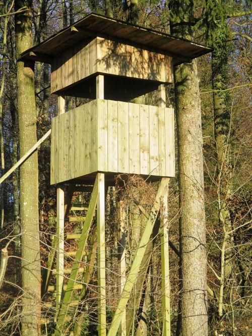 medžioklė,miškas,malonumas,medžiotojas buvo,medžiotojas,miškai,mediena,Thurgau,Šveicarija,Sommeri