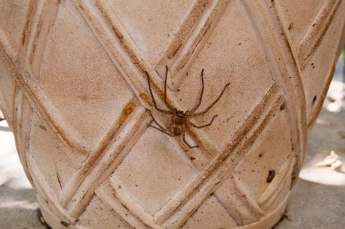 medžiotojas voras,voras,arachnid,medžiotojas,klaida,plėšrūnas,arachnofobija,vabzdys,plaukuotas,baugus,creepy,kojos,akys,medžiotojas,milžinas,lapai,pavojingas,miškas,sodas,beviltiška,fangs,didelis,padaras