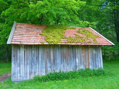 namelis,stogas,samanos,bemoost senas,tvartas