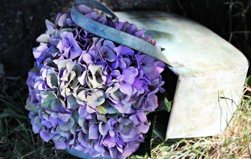 hortenzija,gėlė,žiedas,žydėti,vasara,mėlynas,violetinė,žalias,hortenzijos gėlė,gamta,dekoratyvinė gėlė,dekoratyvinis augalas,flora,mėlyna violetinė hortenzija,mėlyna violetinė gėlė,dekoratyvinis,spalva,fonas,fono paveikslėlis,mėlynos violetinės gėlės,mėlyna violetinė hydrangea gėlė,krepšelis,metalas,lakštas,metalo körbchen,hortenzija krepšelyje,augalas,alavo puodelis,širdis,medis,pieva,nuotaika,šviesos paplitimas