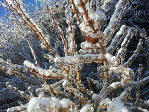 Ledas, Medis, Žiema, Ledinis, Sušaldyta, Ledinis, Snieguotas, Užšaldyti, Šaltas, Sniegas, Šaltis, Oras, Sezonas