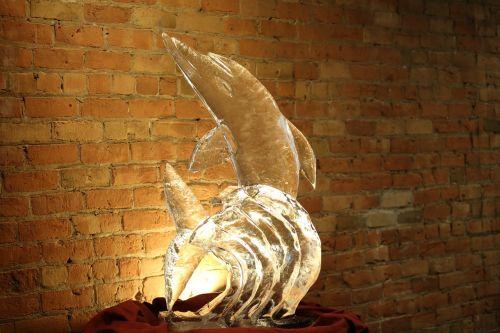 ledas,skulptūra,iškirpti,delfinas,drožyba,raižyti,menas,statula,meno kūriniai,skulptūra,dizainas,šaltas,apdaila,detalus,detalės,gerai,spindesys,šlapias,išgalvotas,blizgantis,kristalas,skaidrus,skystas,gražus,skulptūra,stiklas,aišku,vanduo,figūra