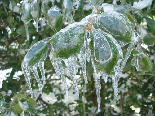 Ledas Dengtas Auksinis Krūmas, Šaltas, Sušaldyta, Ledinis, Ledinis, Žiema, Audra, Gamta
