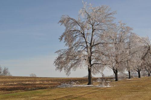Ledo Dengiami Medžiai, Audra, Žiema, Šaltas, Gamta, Sušaldyta, Ledinis, Ledinis, Filialai, Kraštovaizdis