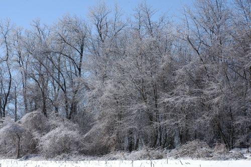 Ledas Audra, Medžiai Su Ledu, Ledų Šakos, Sezonas, Balta, Šaltas, Ledas, Sniegas, Žiema, Šaltis, Snieguotas, Sušaldyta, Lauke, Oras, Sniegas, Saunus, Ledinis, Sniegas, Blizzard, Sniegas