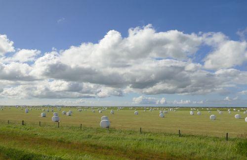 iceland,kraštovaizdis,gamta,Žemdirbystė,pieva,šienas,šieno ryšulius,debesys,derlius