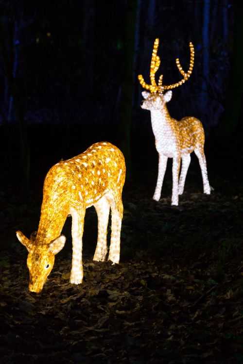 gyvūnas, Kalėdos, apdaila, elnias, šventė, apšviestas, apšvietimas, šviesa, žibintai, naktis, šiaurės elniai, medis, žiema, apšviestas elnias