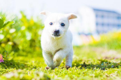 Šuo,mielas,švieži,gyvūnai,augintiniai,gamta