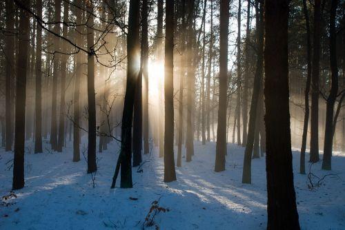 miške,saulės šviesa,gegenlichtaufnahme,gamta,saulė,medžių kamienus,šešėlis,Labas rytas,frisch,medžiai,takas,morgenstimmung,šviesa,atgal šviesa,saulės šviesa,žiema,miškas,žygis,linksmas