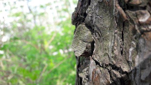 miške, ir Ketvirtadienis., mediena, pobūdį, kalnų, žievė, miškas, žievelės, laukinių, pušis, tekstūros, paviršius, modelis, Narośl