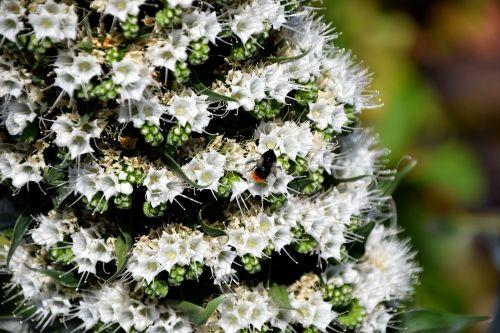 vabzdys,gėlė,žiedas,žydėti,Uždaryti,geltona,žiedadulkės,nektaras,gamta,sodas,pavasaris,apdulkinimas,fauna,vabzdžių makro