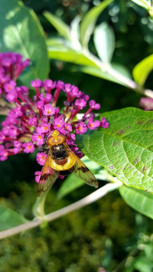 vabzdys, pobūdį, bičių, gėlė, vasara, augalų, lapų, vasarą alyvinė
