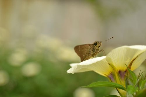 vabzdys,gėlė,drugelis,gyvūnas,skristi,vaizdas,geltona