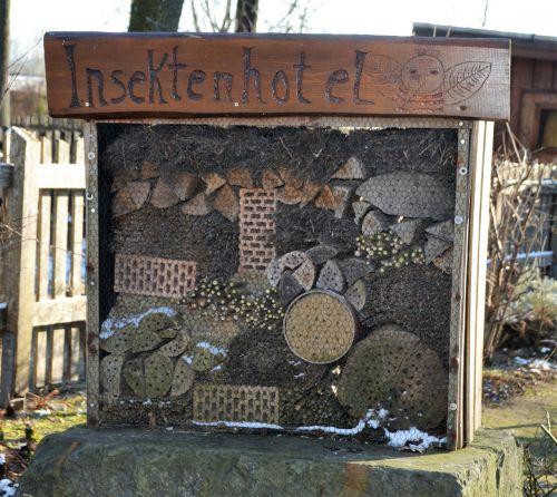 vabzdžių namai,gamta,mediena,vabalas,gyvūnas,gamtos apsauga