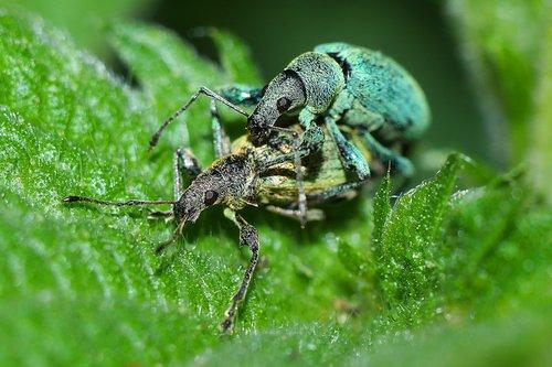 vabzdžiai, makro