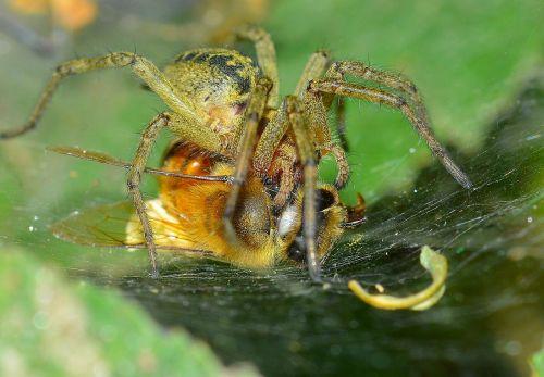 vabzdžiai,voras,grobis,bičių