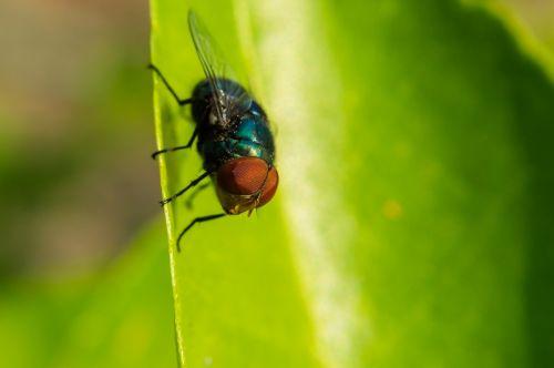 vabzdžiai ovalūs,vabzdžiai,naminiai paukščiai,makrokomandos,šviesus,spalvinga