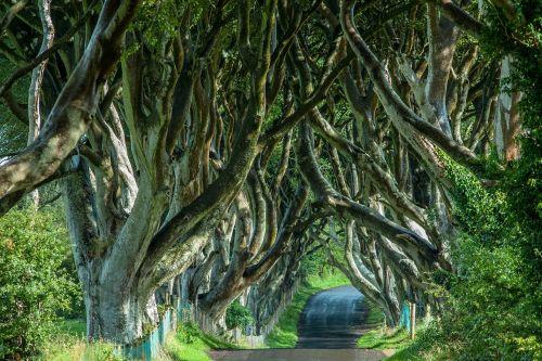 Airija,medžio pamušalas,medžiai,gamta,alėja