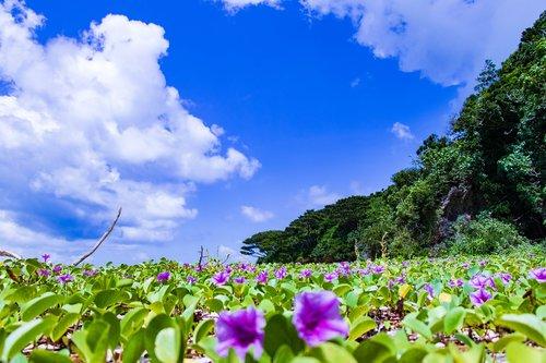 Ishigaki, Okinawa, jūra, kraštovaizdis, vasara, pajūrio, pakrantės, gėlės, pietų šalyse, Japonija, dangus, šviesiai mėlynas, komfortą, Ishigaki Island, žalias, mėlyna, debesis, lapų, papludimys, Pietų sala, poilsiavietė