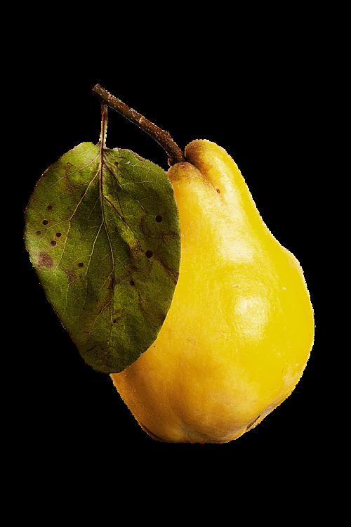 izoliuotas,izoliuoti vaisiai,vaisiai,Guava,skaidrus fonas,skaidrus,skaidrus vaizdas,geltona,vitaminas,skonis,skanus,maistas,sveikas,nukirpimo kelias,valgyti,Sveikas maistas,mityba,daržovių