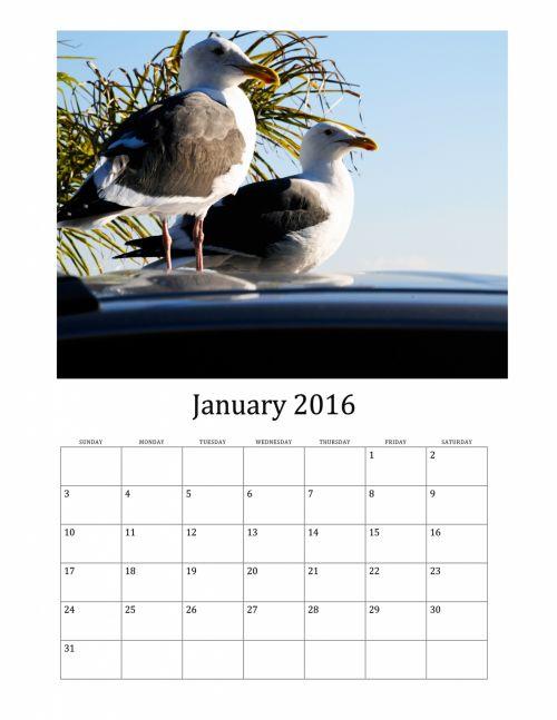 2016, 2016 & nbsp, kalendorius, sausis, 2016 & nbsp, mėnesinis & nbsp, kalendorius, kajakas, žuvėdros, paukštis, paukščiai, 2016 kalendorius & nbsp, sausis & nbsp, kalendorius, 2016 m. sausio mėn. paukščių kalendorius