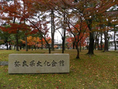 Japonija,parkas,japanese,asija,gamta,kritimas,ruduo,medžiai,vaizdingas,natūralus,ženklas,nara,dykuma,natūralus fonas,kraštovaizdis,miškas,lauke,miško peizažas,sezonas,lapija
