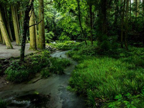Japonija,kumamoto,vandens šaltiniai,ubuyama,vanduo,miškai,upė