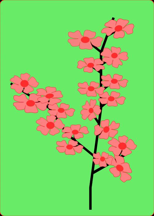 japanese,vyšnia,žiedas,prunus,serrulata,žalias,raudona,rožinis,filialas,gėlė,Japonija,nemokama vektorinė grafika
