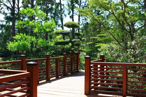 sodai, japanese, morikami, tiltas, medis, gėlė, florida, gamta, japonų sodai