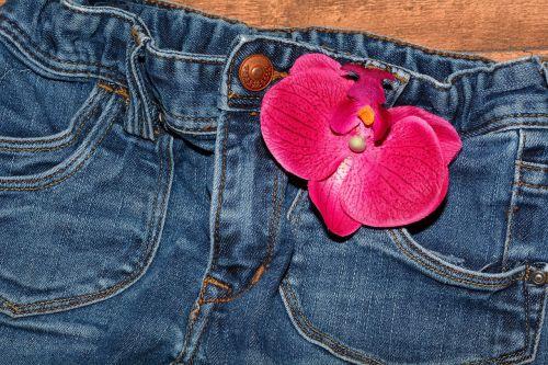 džinsai,pants,apranga,mėlyni džinsai,Uždaryti,orchidėjų gėlė