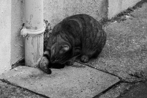 katė, žaisti, gyvūnas, laukinė gamta, kačių, naminiai & nbsp, gyvūnai, jaunas katinas žaisti