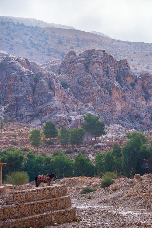 Jordan, Petra, Arklys, Peizažai, Gamta
