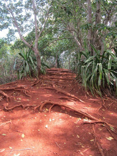 džiunglės,žemės tonai,raudona molio,ochros spalvos,turtingos spalvos,žemė,rotorinis smėlis,šaknis,atogrąžų,Mauricijus