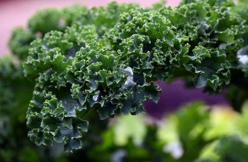 kalytė,šaltis,daržovės,žiemos daržovės,Kohl,žalias,maistas,lapai,sodas,sveikas,esminis,delikatesai,skanus,daržovių augalas,Krauskohl,mityba,šaltas,kopūstai,auskaras,žiema,vitaminai,mikroelementai,eiskristalio