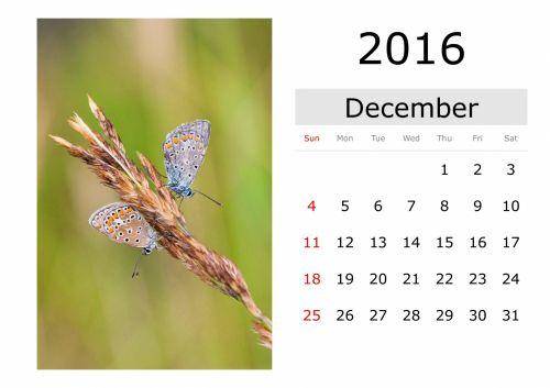kalendorius, šventė, vardai, mėnuo, data, diena, naktis, pirmadienį, antradienis, trečiadienis, ketvirtadienis, penktadienis, šeštadienis, sekmadienis, sausis, vasaris, Kovas, Balandis, Gegužė, birželis, liepa, Rugpjūtis, september, Spalio mėn, lapkritis, gruodžio mėn ., pavasaris, vasara, ruduo, žiema, drugelis, kalendorius - 2016 m. gruodžio mėn. (angl.)