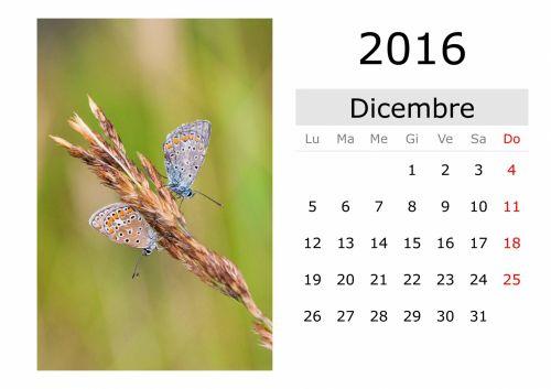 kalendorius, šventė, vardai, mėnuo, data, diena, naktis, pirmadienį, antradienis, trečiadienis, ketvirtadienis, penktadienis, šeštadienis, sekmadienis, sausis, vasaris, Kovas, Balandis, Gegužė, birželis, liepa, Rugpjūtis, september, Spalio mėn, lapkritis, gruodžio mėn ., pavasaris, vasara, ruduo, žiema, drugelis, kalendorius - 2016 m. gruodžio mėn. (italų kalba)