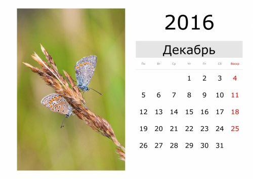 kalendorius, šventė, vardai, mėnuo, data, diena, naktis, pirmadienį, antradienis, trečiadienis, ketvirtadienis, penktadienis, šeštadienis, sekmadienis, sausis, vasaris, Kovas, Balandis, Gegužė, birželis, liepa, Rugpjūtis, september, Spalio mėn, lapkritis, gruodžio mėn ., pavasaris, vasara, ruduo, žiema, drugelis, kalendorius - 2016 m. gruodžio mėn. (rus.)