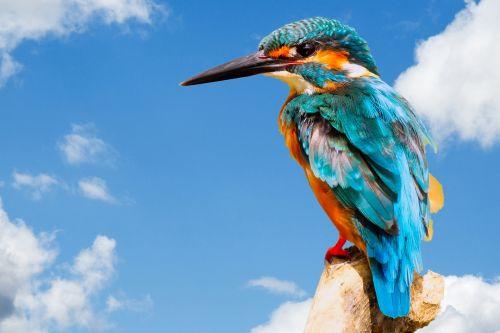 žirgynas, paukštis, gyvūnas, gamta, Iš arti, gražus, plunksnos, mėlynas, detalės, dangus, snapas, plumėjimas, Laisvas, viešasis & nbsp, domenas, žirgynas