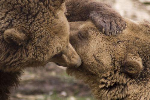 bučiniai,Draugystė,turėti,gamta