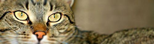 kačiukas,katė,skaitmeninis,augintiniai,katės akis,naminis katinas,tabby kačiukas,kačių galva,atsipalaiduoti,gyvūnas,reklama,antraštė