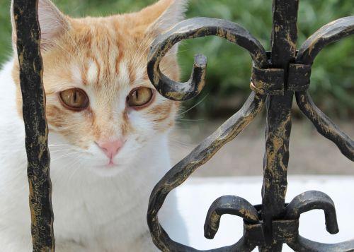 katė, kačiukas, kačiukas, oranžinė, gintaras, gintaro akys, grožis, linksma, kačiukas