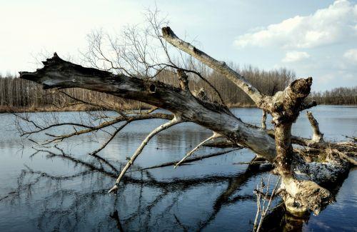 Danube, šlapynes, pečių, vanduo, upė, atspindys, užtvanka, miškai, medis & nbsp, bagažinė, slovakija, nuotraukos, Laisvas, medžio kamieno upėje