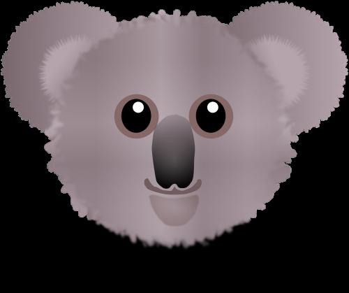 koala,turėti,Wombat,Koala Bear,phascolarctos cinereus,linksma,jaukus,purus,tvirtas,jaukus,mielas,australia,phascolarctidae,nosis,nemokama vektorinė grafika